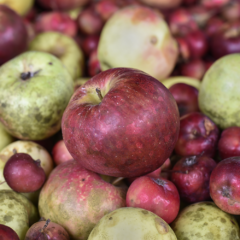 Cider Association Unveils Certified Pommelier Exam