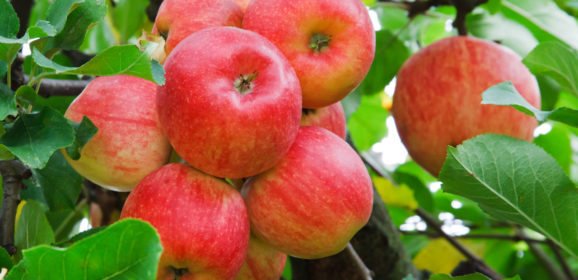 Becoming a Certified Cider Professional